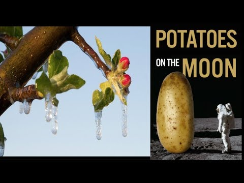 Potatoes on the Moon, Greenhouses in Antarctica - Crop Losses Continue