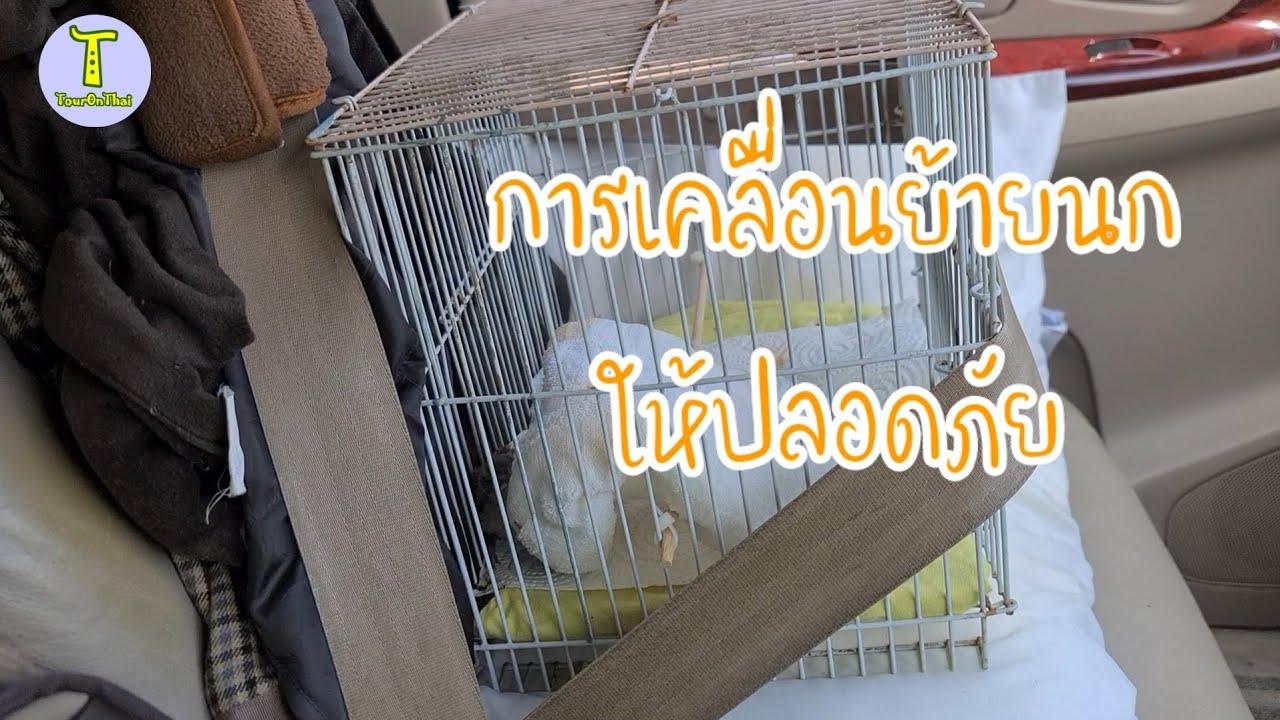 การดูแลลูกนกที่ตกจากรัง #EP2 การเคลื่อนย้ายนก จากที่หนึ่งไปที่หนึ่งหรือการพาลูกนกไปหาสัตวแพทย์