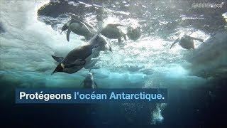 Biodiversité : la mission de Greenpeace pour la création d'un sanctuaire marin en Antarctique