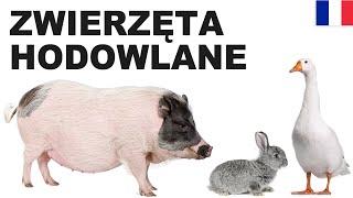 Apprendre le polonais - Les animaux d'élevage 2 (Zwierzęta hodowlane)