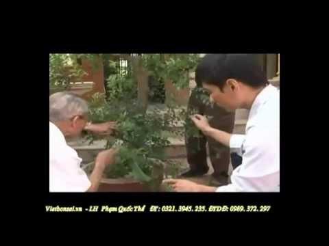 Kỹ thuật tạo kiểu cành cơ bản cho cây bonsai 1/4 (Techniques for basic styling tree branch)