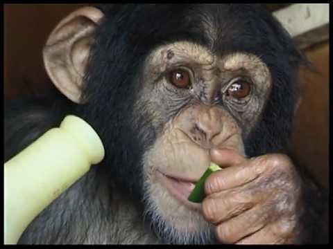 Wild Thing Season 2 Preview - Tarzan & The Chimp