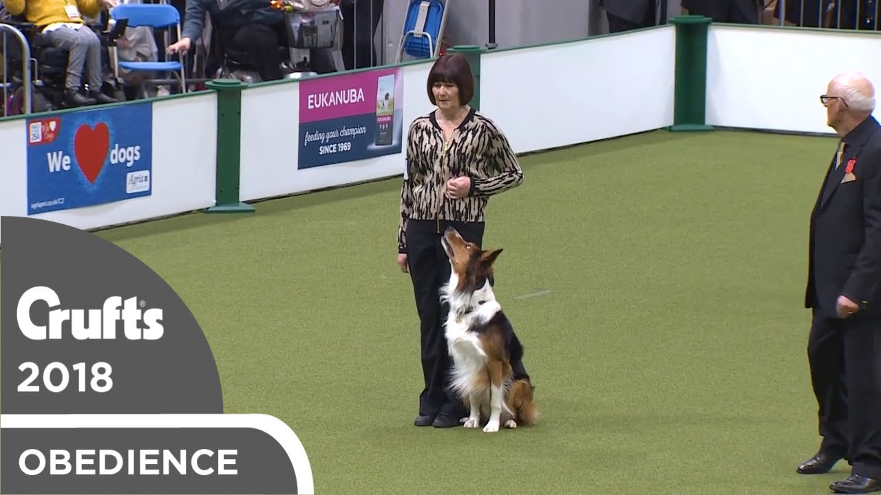 Obedience - Dog Championship - Part 17   Crufts 2018