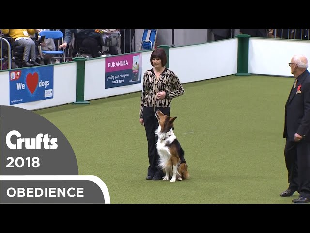 Obedience - Dog Championship - Part 17 | Crufts 2018