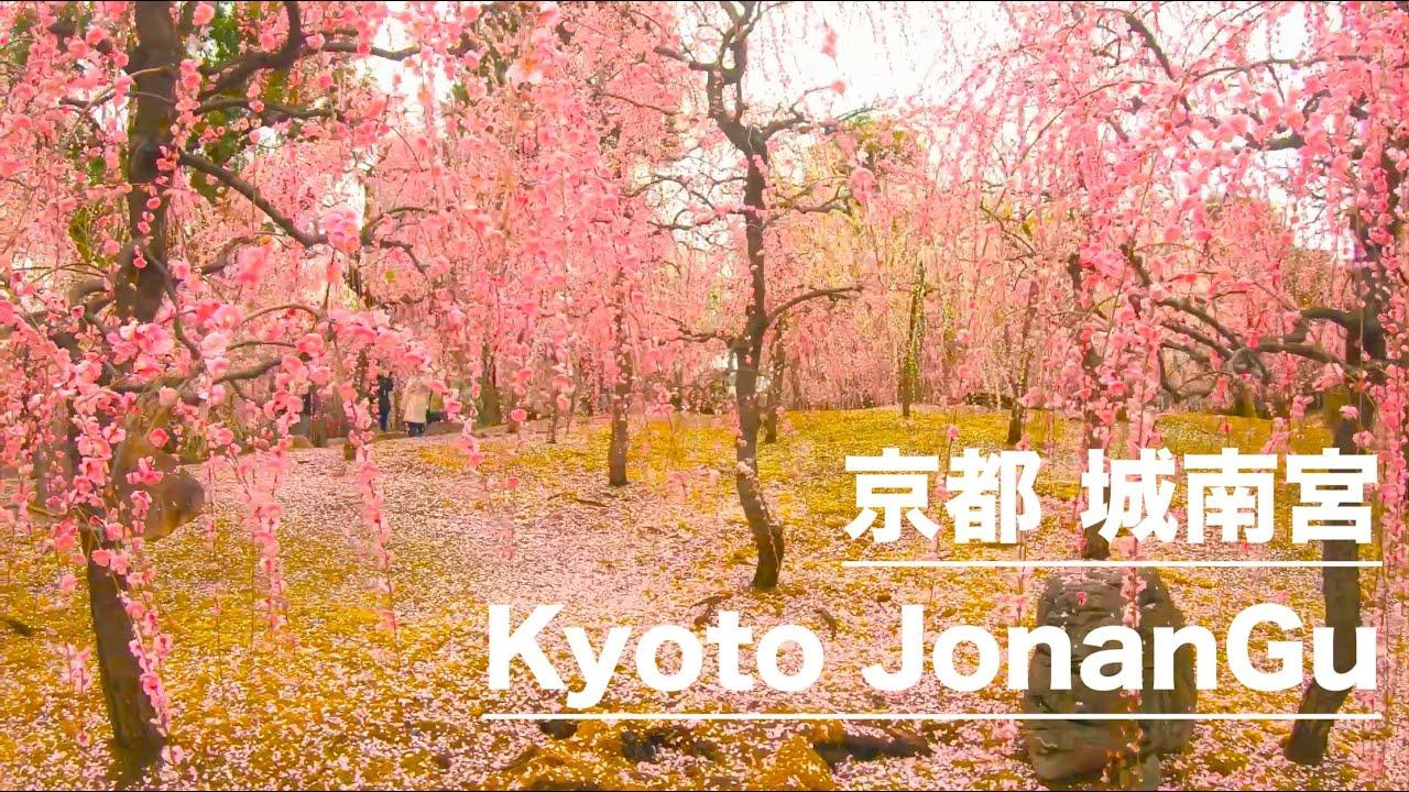 宮 京都 城南