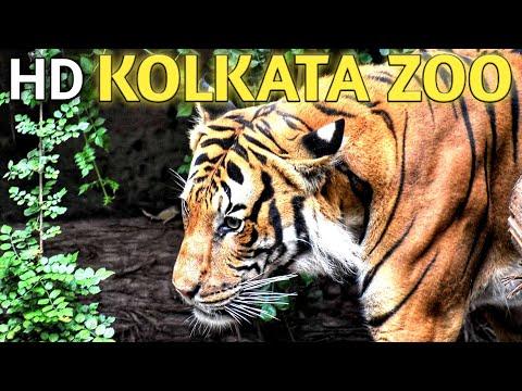 The Zoological Garden, Alipore ( Alipore Zoo or Calcutta Zoo) wild life #wish107.5 #BLACKPINK