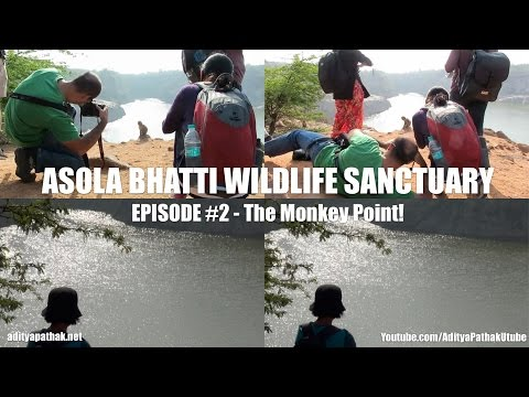 Asola Bhatti Wildlife Sanctuary : Episode 2 - The Monkey Point! (Feb 2015)