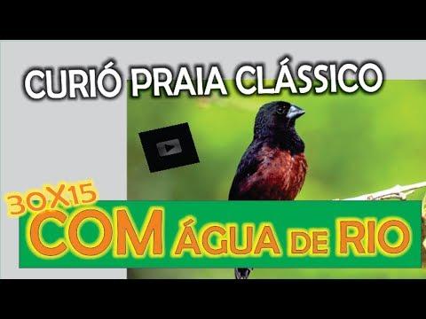 #14 Curió Pavarotti Gravação Analógica Canto Praia Grande Super Clássico 30x15 De água De Rio