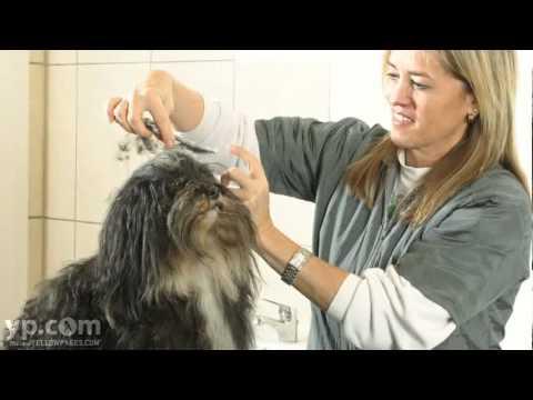 Norwood Animal Clinic | Veterinarian | Milwaukee Wisconsin