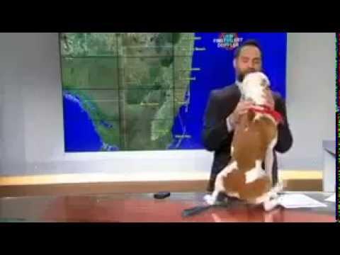 Pets Streamcloud