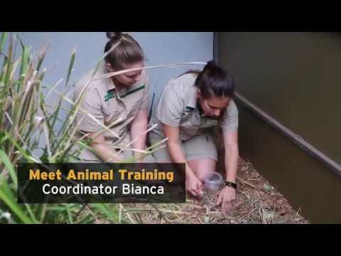 A Day in the Life of an Animal Trainer