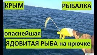 Крым. Самая ядовитая рыба Европы. Поймал морского дракона.