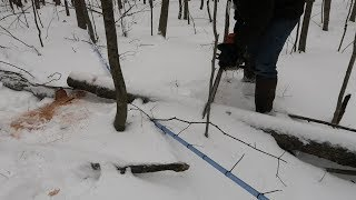 Finished Maple Syrup Lines and Crashing Trees Took them OUT.
