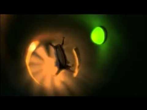 Biała i Strzała podbijają kosmos 3D