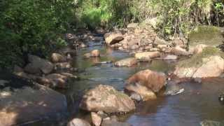 NATURE SOUNDS Stream and Bird Songs Relaxing Sleeping and
