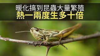 思浩話你知全球暖化搞到昆蟲繁殖能力上升,隨時食哂人類糧食!(大家真風騷)