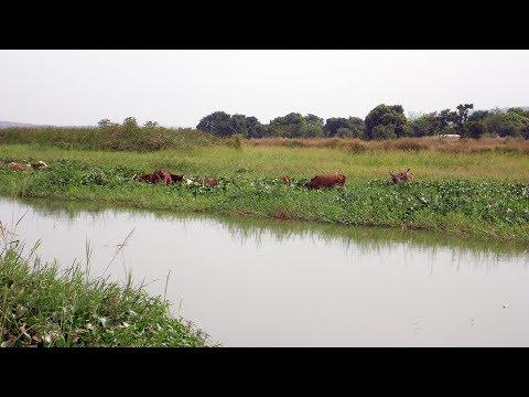 Along the Irrigation Canal - Bamako, Mali