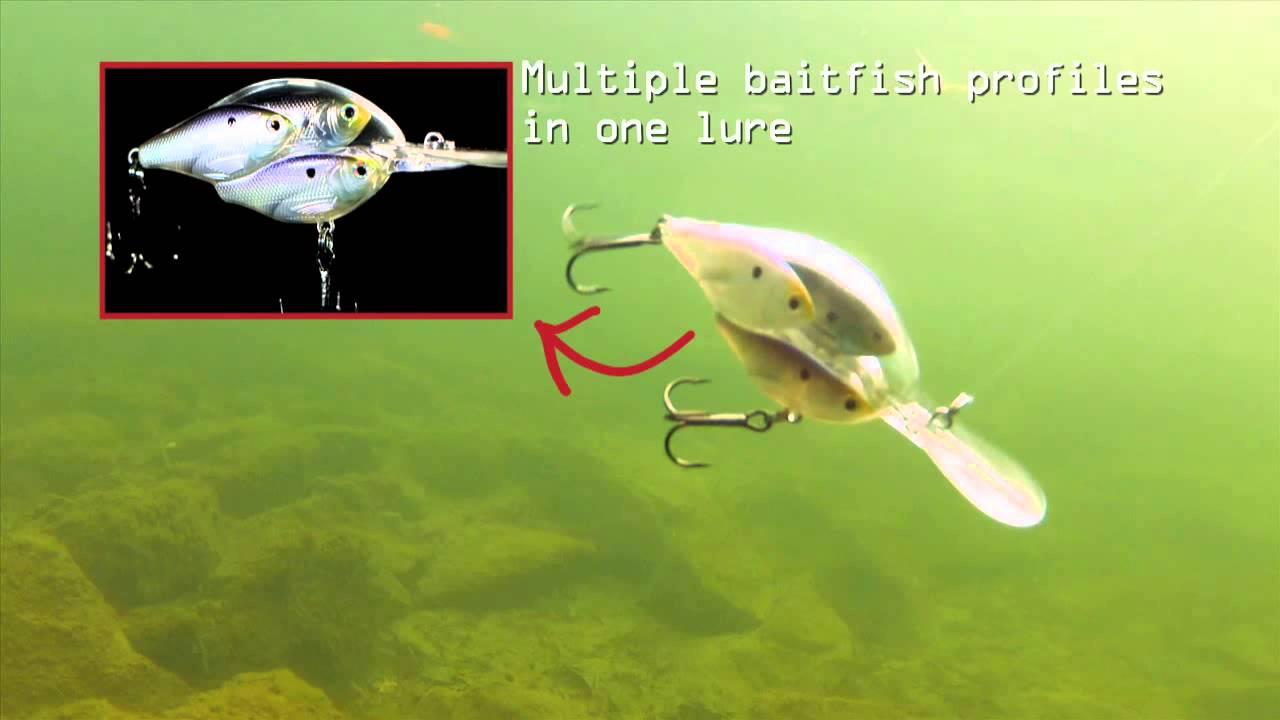 livetarget baitball series- threadfin shad crankbait - youtube, Fishing Bait