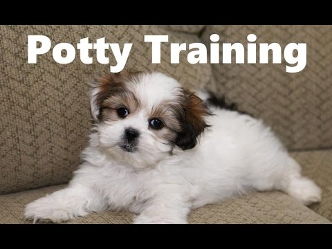 how to make your puppy stop peeing in the house