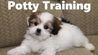How To Potty Train A Malshi Puppy - Mal-Shi House Training Tips - Housebreaking Mal Shi Puppies