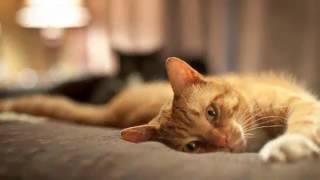 Няшные Рыжие Котейки, Коты, кошки, котята