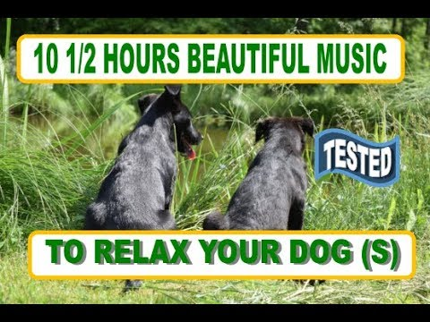 Relaxation Music Therapy Music Video For Your Anxious Loving Dog