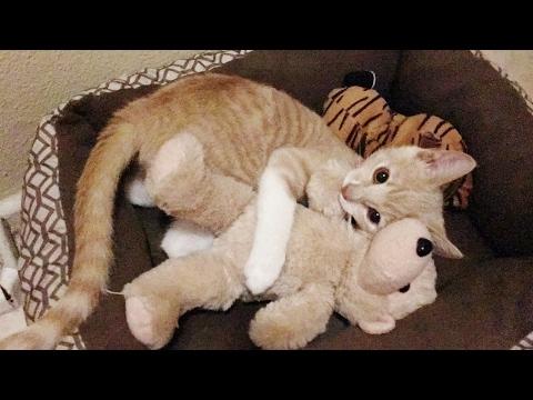 Kitten play with stuffed animals, kitten toys