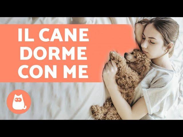 Perché il cane dorme con me? - 6 motivi che ti innamoreranno