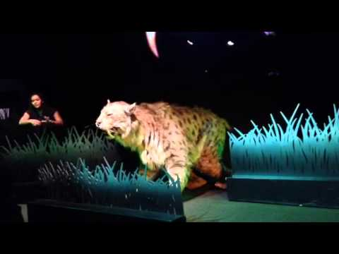 Sabre tooth cat from the La Brea Tar Pits (Ice Age Encounte