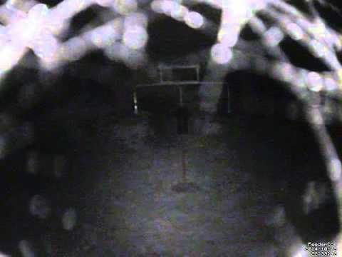 Feedercam Capture (2014-10-09)