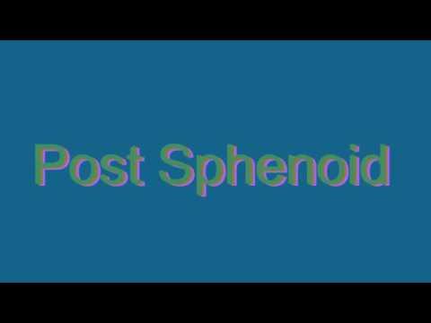 sphenoid bone pronounce – citybeauty, Human Body