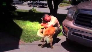 [YENİ HD]köpekler Karşılama Askerler Eve Derleme 2013