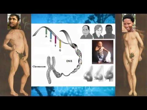 Stammgeschichte des Menschen