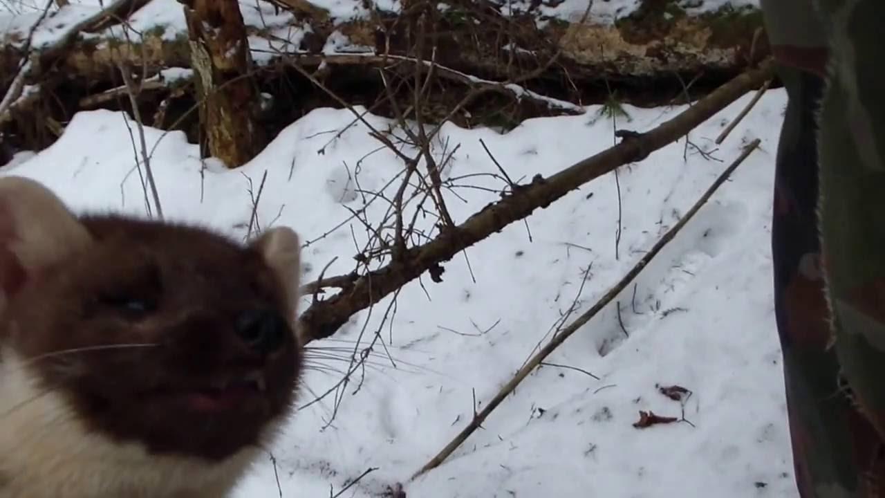Капканы ловушки куница своими руками фото 437