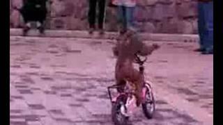 Funny Monkey Riding The Bike [ WWW.BEST2WATCH.COM ]