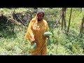 Village Foods - Green Papaya Cooking Desi Special Green Papaya | Cooking Bengali Style Green Papaya