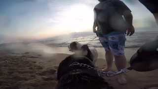Beach Day With A Gopro