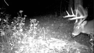 Deer Cam 074 1