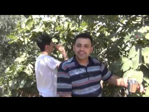 05 08 2014 MARDİN Yeşil Xurs'un vazgeçilmez meyvesi İncir