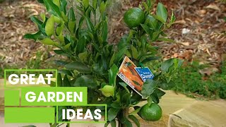 Better Homes and Gardens - Gardening: Dwarf citrus plants