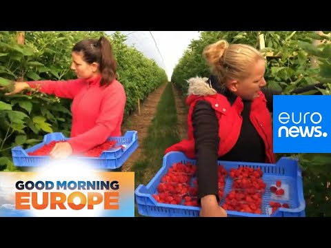 France 24:UK suffers from shortage of seasonal fruit pickers this summer