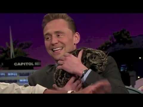 Download animals loving tom hiddleston for 1 minute straight