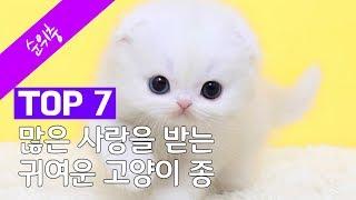 많은 사랑을 받는 귀여운 고양이 종 TOP 7