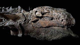 11 Phát Hiện Khảo Cổ Đáng Kinh Ngạc Nhất Mới Được Tìm Thấy
