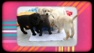Seeing Eye Dogs Australia Loves Petbarn