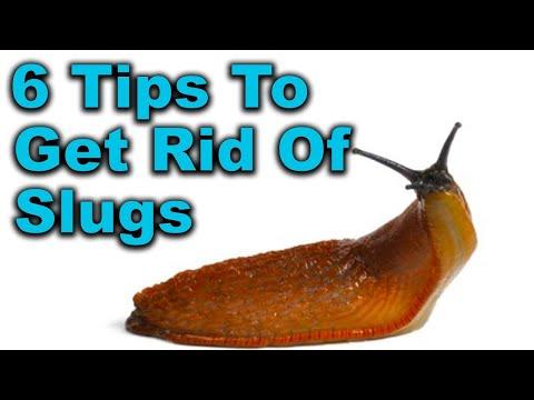 Slugs in Garden - 6 Proven Slug Control Methods That Work