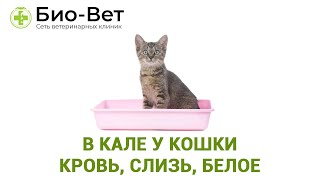 В кале у кошки кровь, слизь, белое. Ветеринарная клиника Био-Вет.