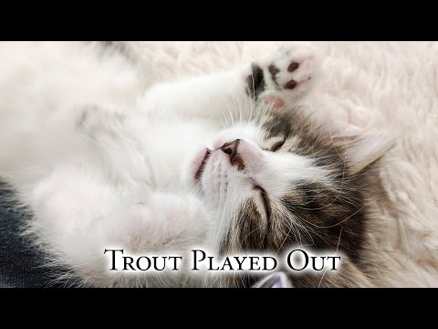 Trout Played Out