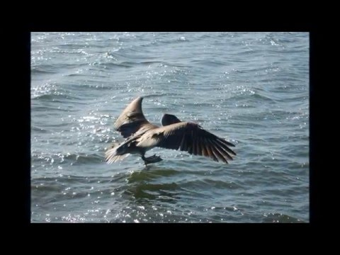Marine Wildlife Photo/Video Slideshow