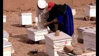 Création d'une unité apicole- Association « Ajdig » pour le développement de la femme rurale